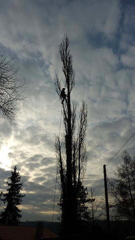 Baumklettere, Baumpflege, Baumfällungen