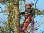 Fällgenehmigung, Sicherheitsrisiko, Baumfällung