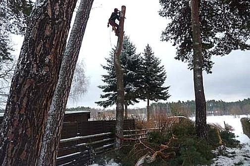 Baumkletterer, Baumpflege, Baumfällungen
