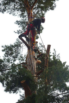 Baumpflege, Seiltechnik, Seilpol