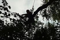 Totholzentfernung, Kronenpflege, Freischnitt