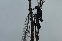 Gehölzschutzrecht, Gehölzschutzsatzung, Baumschutzsatzung